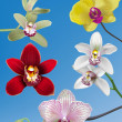 Постер, плакат: A Collection of Orchid Vectors