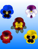 Pansy Viola flower Vector Illustrations — Stock Vector