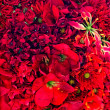 Bunch of red flowers — Stock Photo