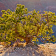 Desert tree - Stock Photo