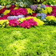 Stock Photo: Beautiful floral garden