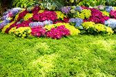 Beautiful floral garden — Stock Photo