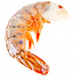 Isolated Shrimp — Stock Photo