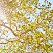 Sun shining through leaves - Stock Photo