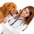 Female veterinarian — Stock Photo