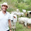 Stock Photo: Male rancher