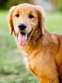 Bellissimo cane al parco — Foto Stock