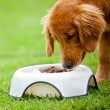 Dog eating his food - Stok fotoğraf
