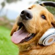 Dog with headphones - Stock Photo