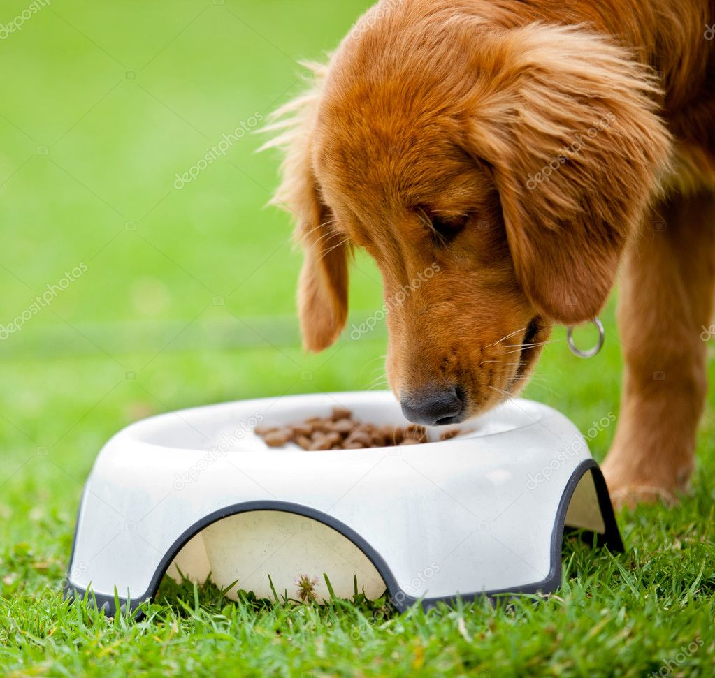 Cute dog at the park eating his food — Stock Photo #8963125