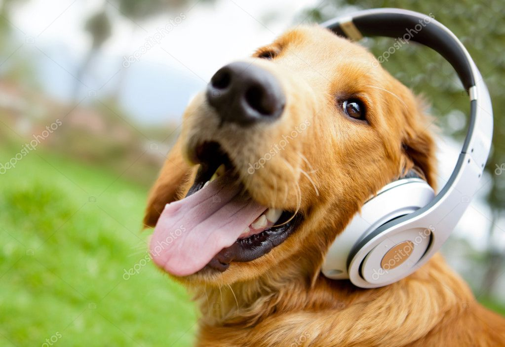 Cute dog listening to music with headphones - outdoors — Stock Photo #8963126