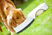 Puppy eating his food — Stock Photo