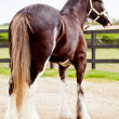 Beautiful horse outdoors - Stok fotoraf