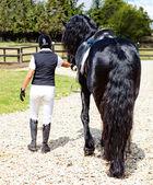 Woman walking a horse — Stock Photo
