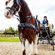 Stock Photo: Horse carriage