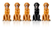 Dogs in a row — Stock Photo