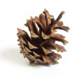 Royalty-Free Stock Photo: A one small pinecone