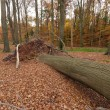 Fallen tree - Stock Photo