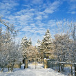 图库照片: Trees in snow next to fence against blue sky