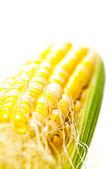 Fresh young corn — Stock Photo
