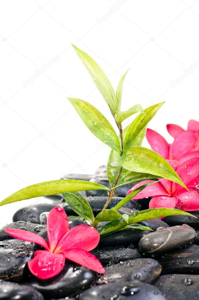 Black zen stones with red flowers and bamboo plant — Stock Photo #10732072
