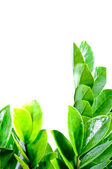 Green leaves close up — Stock Photo