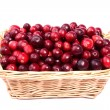 Fresh cranberry in wicker basket made in studio isolated on white backg — Foto Stock #7999896