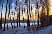 Winter sunny landscape, snow garden tree view — Stock Photo