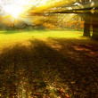 Sunrise rays, beam of light in park — Stock Photo