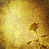 Old parchment with rose flower, textile vintage abstract background — Photo