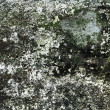 Stock Photo: Old molded wall texture or background