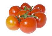Niektóre dojrzałe pomidory na oddział. — Zdjęcie stockowe