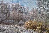 Het landschap van november. — Stockfoto