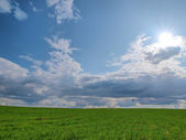 Background. A green grass and the blue sky with clouds and the s — Stock Photo