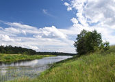 The river Mologa in the summer. — Stock fotografie