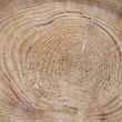 Stock Photo: Cross-section saw cut of log of pine.