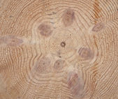 Cross-section saw cut of a knotty log of a pine. — Stock Photo