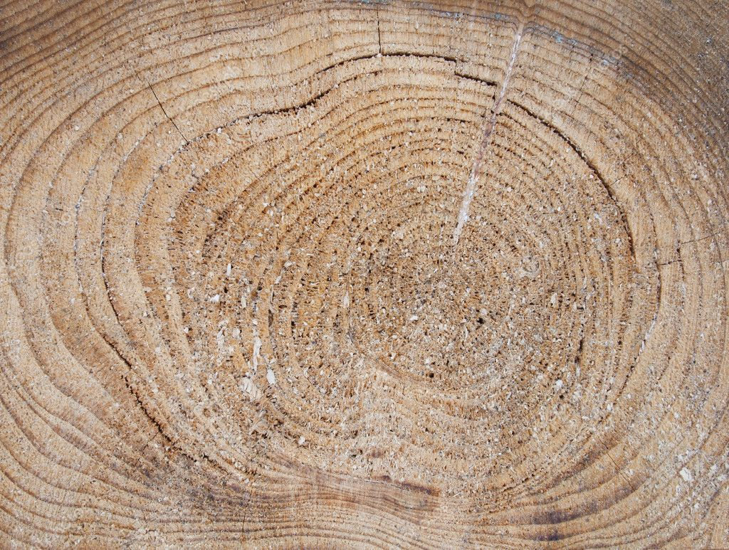 Coupe scie coupe transversale dun tronc dun pin - Coupe transversale d un tronc d arbre ...