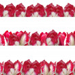 Three different frames with the red-white tulips, isolated on a — Stock Photo