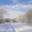 Snow footpath, trees in snow and the blue sky with clouds. — Stock Photo #9324962