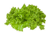 Leaves of green fresh lettucel. — Stock Photo