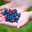 Woman hands holding ripe berries — Stock Photo