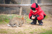 Little boy play with a rabbit — Stock Photo