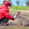 Little boy feed a rabbit — Stock Photo