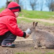 Stock Photo: Little boy feed a rabbit