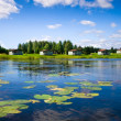 Stock Photo: Beautiful forest lake with water lilies