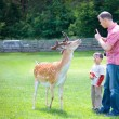 Father and son in a park with deer — Stock Photo