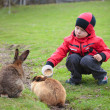 Little boy feed a rabbit — Stock Photo #10649563
