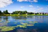 Beautiful forest lake with water lilies — Stock Photo
