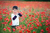 Boy in poppies — Stock Photo
